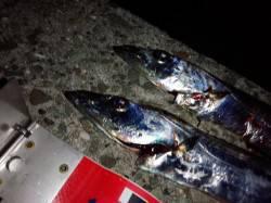 ワインドでのタチウオ釣果です