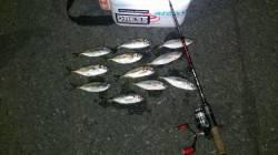 大阪南港 夕方からのアジング釣行 ラッシュタイムもあり