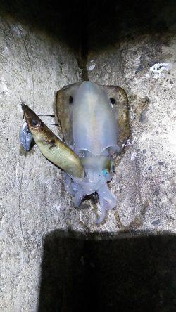 満月を期待して加太でエギング 底付近で4ハイ釣れました