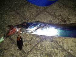 大阪湾エリアのタチウオ 釣果はルアー2、テンヤ1、ウキ1でした