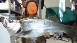 日高川周辺スズキ狙いで釣行 体格のいいヒラスズキをゲット!