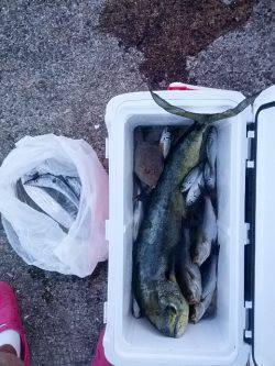 小浦一文字シイラ・タチウオなど多彩な釣果 イサギは好調でした