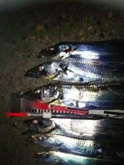 大阪南港 ウキ釣りのタチウオ狙いは92cmがファーストヒット