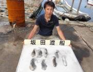 黒島の磯 エギングでアオリイカ新子の釣果
