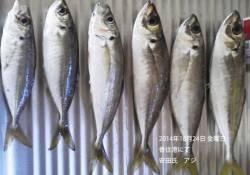 香住港にてアジの釣果
