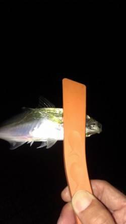 神戸港アジング 雨と雷のため短時間だけの釣りでした