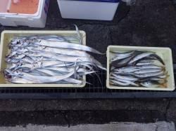 芳養堤防での夜釣りの釣果 タチウオ27匹・カマス29匹・アジ