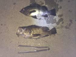 紀ノ川河口周辺でウキ釣り 竿一本沖に少し投げるとメバル・グレがヒット