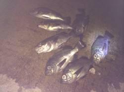 紀ノ川河口 夜のウキ釣りでメバル狙い釣行
