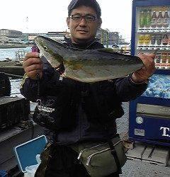 岸和田一文字・沖の北 ルアーでスズキ82cm 他メジロも釣れています