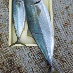 岸和田一文字・沖の北でメジロ60cmとブリ90cm!メジロが小さく見えます…