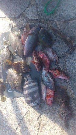 初の翼港で投げ釣り&探り釣り 色々な魚種が釣れました