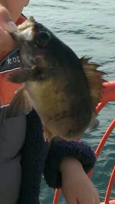 家族で平磯海釣り公園へ♫ お子様がウキ釣りでメバル・ガシラ・ベラ