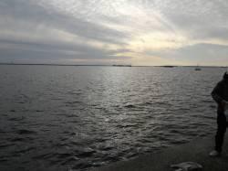 鳴尾浜 アジ・グレ・タチウオ・サヨリなどの釣果