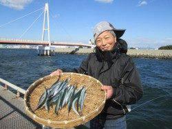 尼崎市立魚つり公園 強風の中でサヨリ40匹