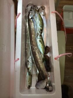 おのころ裏 夕方はサビキでアジ 夜はウキ釣りでタチウオ狙い