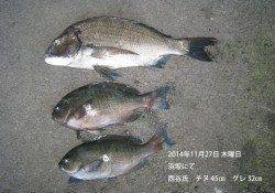 浜坂にて良型チヌとグレの釣果