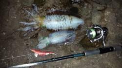 白浜エリアにエギング釣行 サイズもよくなってきて楽しめました