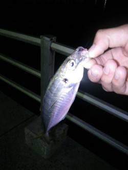 洲本で人生初のアジング レンジを調整すると釣れました♫