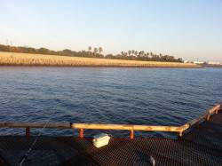 尼崎市立魚つり公園 昼からの釣りでセイゴ1本…朝マヅメがいいみたいです