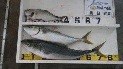 芳養堤防でシオ・メジロの釣果 カマスの泳がせ釣りでヒット