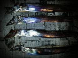 舞洲 17時~19時のタチウオテンヤ釣行、リリース含めて5匹の釣果