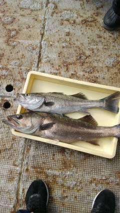 岸和田一文字・沖の北 イワシとドジョウをエサに良型タチウオ