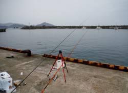 和田漁港でサビキ&チョイ投げ アジ30匹ほどと良型キスで楽しめました