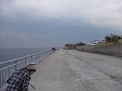 南芦屋浜 サヨリは気配なく2匹のみ、最後にサンバソウが釣れました
