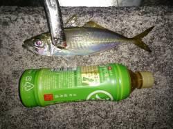 淡路島・おのころ愛ランド周辺アジング 平均25cmのアジ大漁で大満足♫