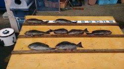 萩尾の磯 小イナヤでのフカセ釣りで良型グレ7枚