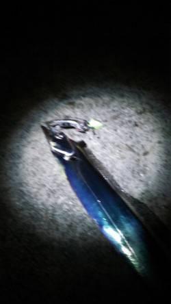 夕方から南芦屋浜にタチウオワインド釣行 暗くなる直前にはアジの短い時合