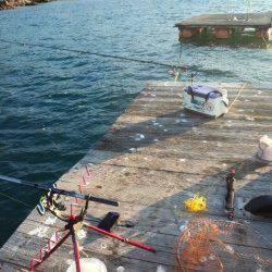 栖原の筏 何とかコウイカ3バイ…今年アオリイカは少ないようです