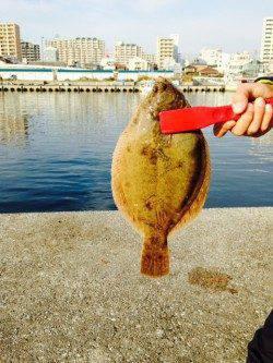 垂水漁港 投げ釣りで30㎝近くのカレイ! シーズン到来を感じました