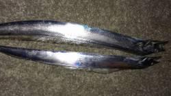 尼崎 カタクチの回遊なくジグにアタリなし 前日はタチウオ2匹の釣果