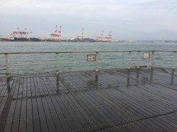 南港周辺でサビキ釣り 14:00くらいから毎投アタリ、アジ多数