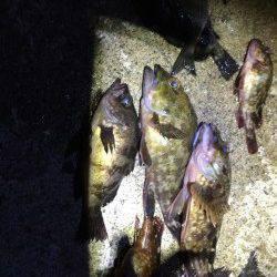 佐野漁港 ウキ釣りでガシラ・メバル・小チヌ数出ました