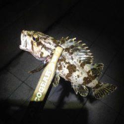 神戸港アジング 常夜灯が効いたPOINTにはアジが沸いていました♫