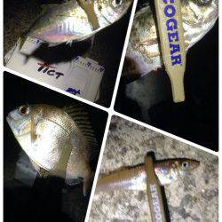林崎漁港 アジング、ガシリングで五魚種達成
