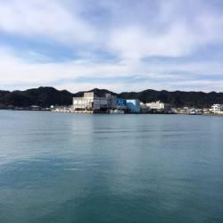 勝浦漁港でライトゲーム スピンテールジグでサバとホウボウの釣果