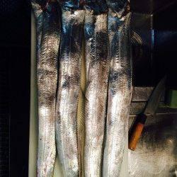 南港周辺にてタチウオF5.5サイズ 釣れた5本全部メーターオーバーでした☆