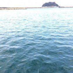 香住東港 のべ竿でサヨリ釣りを楽しみました