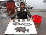 黒島の磯 大きいイシガキダイが釣れました☆