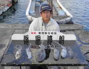 黒島の筏、黒島の磯 ヤエンでのアオリイカ釣果