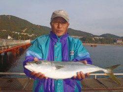 須磨海づり公園 ウキ流し釣りでメジロ60cm