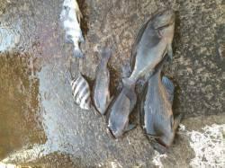爆風でしたがカゴ釣りをするため北港へ〜グレ・サンバソウ・チヌ・アイゴ