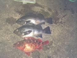 紀ノ川河口 ウキ釣りでメバル・ガシラ、少し遠投でグレもヒット