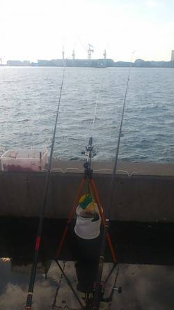兵庫突堤 投げ釣りでキスの釣果 サビキのアジは気配なく辛い釣りに