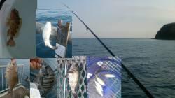 とっとパーク小島 浮き流し釣り・かご釣りでメバル・チヌ・アジなどの釣果