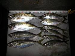 淀川河口アジング ボトムドリフトパターンでアジ祭り☆デカアジもまじります